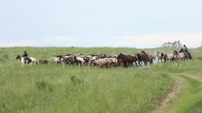 Horses herd running in the field Royalty Free Stock Photos