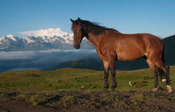 Horses in the high mountains Royalty Free Stock Image