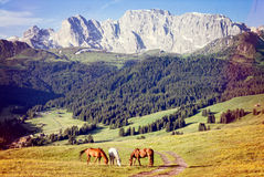Horses at high mountains meadow Stock Photo