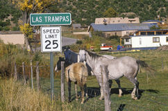 Horses on High Road to Taos, NM Stock Photography