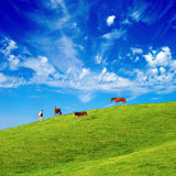 Horses on a Hill 752. Horses and a donkey on a grassy hill Royalty Free Stock Image