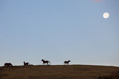 Horses on the hill Royalty Free Stock Photos