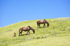 Horses on the hill Stock Image