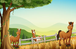 Horses at the hill near the tree Stock Photography