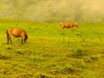 Horses in the  hill Stock Images