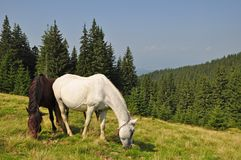 Horses on a hillside. Stock Photo