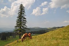 Horses on a hillside Stock Photos