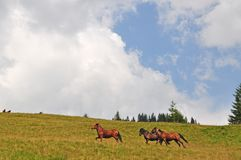 Horses on a hillside Stock Images