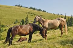 Horses on a hillside Stock Photo