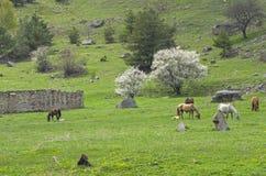 Horses on a hillside. Royalty Free Stock Photo