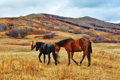 The horses on the hillside Stock Photos