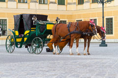 Horses for hire in Vienna Stock Photography