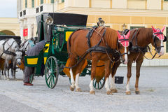 Horses for hire in Vienna. Carriage with horses for hire in Vienna Austria in front of Schonbrunn Palace Stock Images
