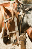 Horses at a hitching post Stock Photos
