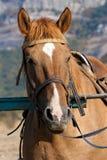 Horses at a hitching post Stock Photos