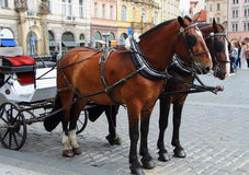 Horses hitching up in Prague Royalty Free Stock Images