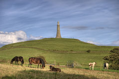 Horses on Hoad Hill Royalty Free Stock Image