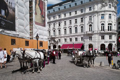 Horses in Hofburg Stock Images