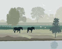 Horses in Holland Royalty Free Stock Image