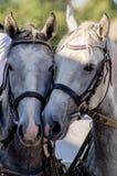Horses. Stock Photo