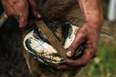 Horses hoof being prepared for shoeing Stock Photos