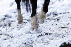 Horses Hoof in winter outside Stock Photo