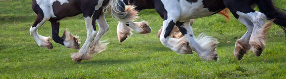 Horses hooves in motion Royalty Free Stock Image