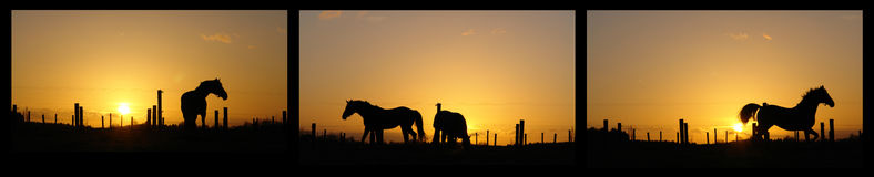 Horses on horizon backlit by sunset