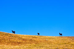 Horses on the horizon Royalty Free Stock Photo