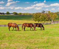 Horses at horse farm royalty free stock photography