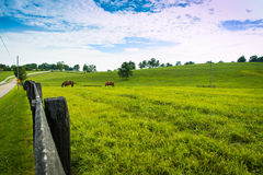 Horses at horse farm. Country landscape. Stock Photos