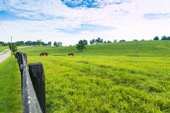 Horses at horse farm. Country landscape. Royalty Free Stock Image