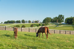 Horses at horse farm. Country landscape. Royalty Free Stock Photography