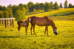 Horses at horse farm. Country landscape. Royalty Free Stock Photos