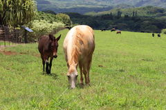 Horses. Horse and foal on a pasture country side Stock Photography