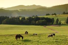 Horses and idyllic morning Stock Photo
