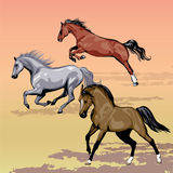 Horses. Illustrations vectors stallions running Royalty Free Stock Photos