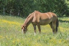 Horses Stock Photo