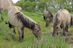 Horses In Beautiful Landscape Royalty Free Stock Images