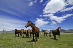 Horses In Field Royalty Free Stock Photos