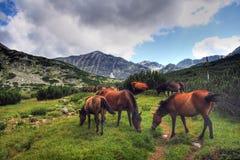 Horses In Rila Royalty Free Stock Photo