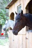 Horses In Stable Royalty Free Stock Photo