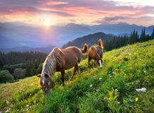 Free Horses In The Carpathians Royalty Free Stock Images - 194936229