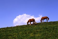 Free Horses In The Meadow Stock Images - 5764264