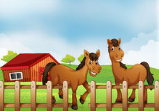 Horses inside the wooden fence with a barn Stock Photography