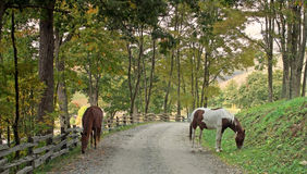 Horses inthe road Royalty Free Stock Photos