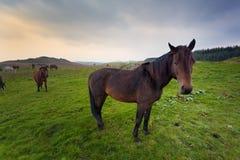 Horses in Irish countryside Stock Photos