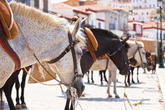 Horses at the island of Hydra. Greece Stock Images