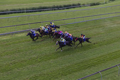 Horses Jockeys Sprint Race  Royalty Free Stock Photo
