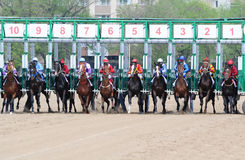 Horses jump out starting gate Stock Image